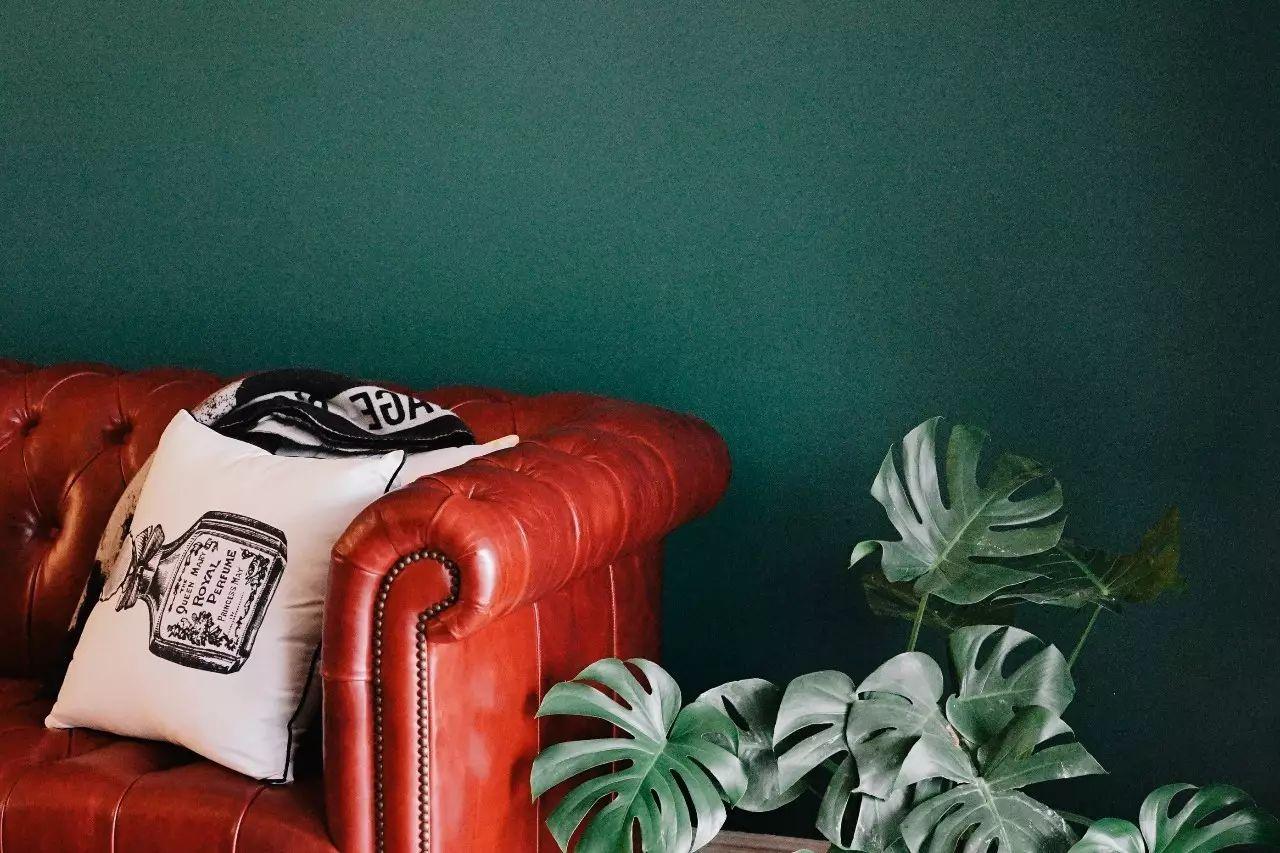黎贝卡:选对绿植,你的家也可以像家居图那么美