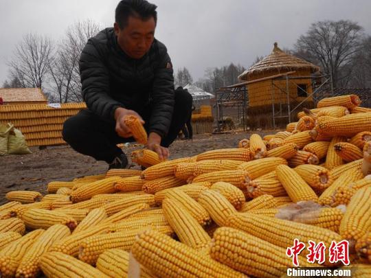 目前刘洪财还在继续着玉米屋的建造,预计还要一周时间才能全部建成。 苍雁 摄