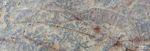 化石。(配合社)