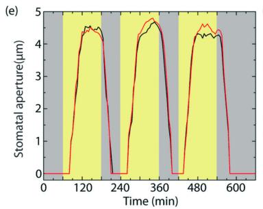 图 3:通过测量气孔开合的时间,科学家们就可以准确判断职务已经处于哪种状态。