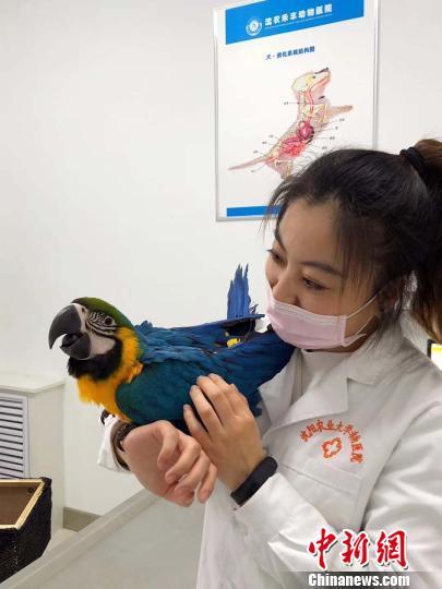 鹦鹉小患者跟美女医生合影。 赵桂华 摄