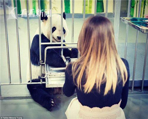 美第一夫人喂熊猫抚摸爪子 外媒:着装引熊猫好感