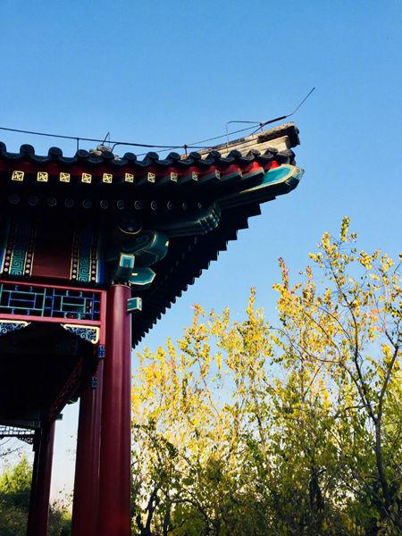 11日,北京晴冷,蓝天再现。(来源:微博 _朱凤君_)