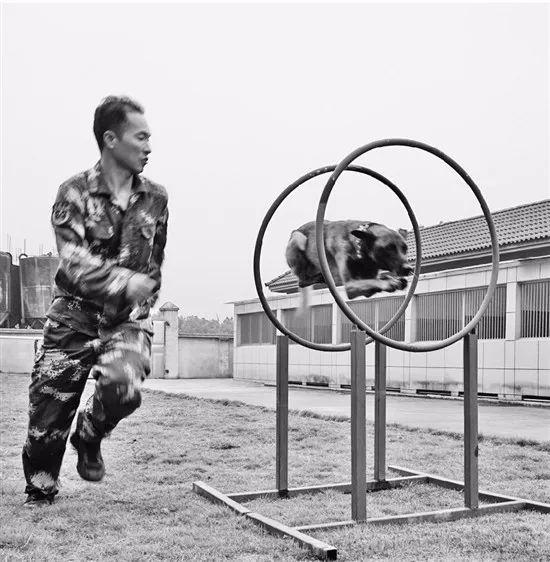 """""""佳宝""""和它的训导师王科峰"""