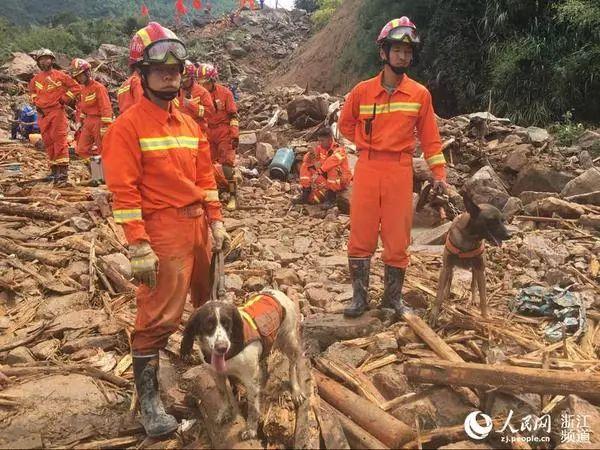 两条搜救犬仔仔(左)和佳宝(右)在苏村救援现场