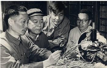 △早期袁隆平与助手李必湖(左三)等在实验室(图片来源于网络)