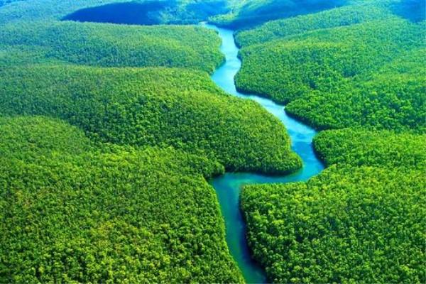 全球变暖削弱了植物的吸碳能力