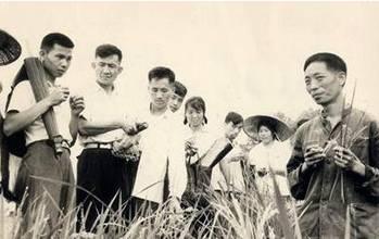 △1967年,袁隆平在试验田介绍雄性不育水稻(图片来源于网络)
