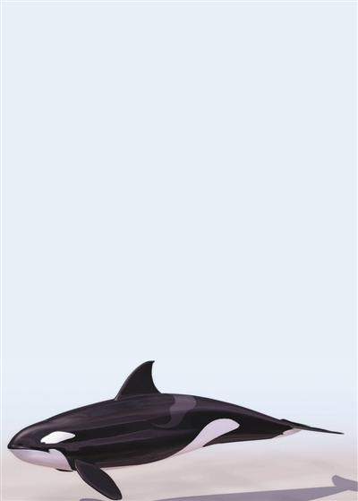 定位系统如此高端, 鲸鱼为何还会傻傻游上岸