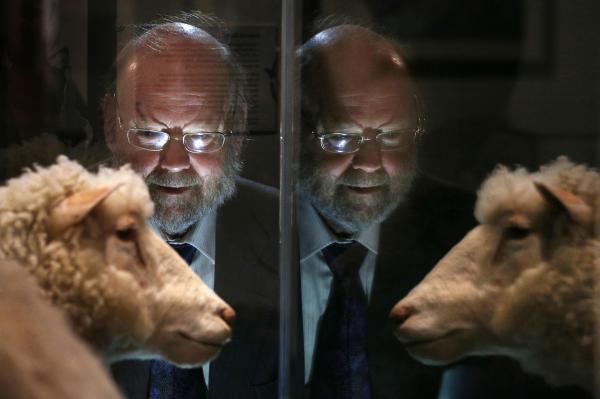 克隆羊多利曾患关节炎 克隆动物会患早发性老年病?