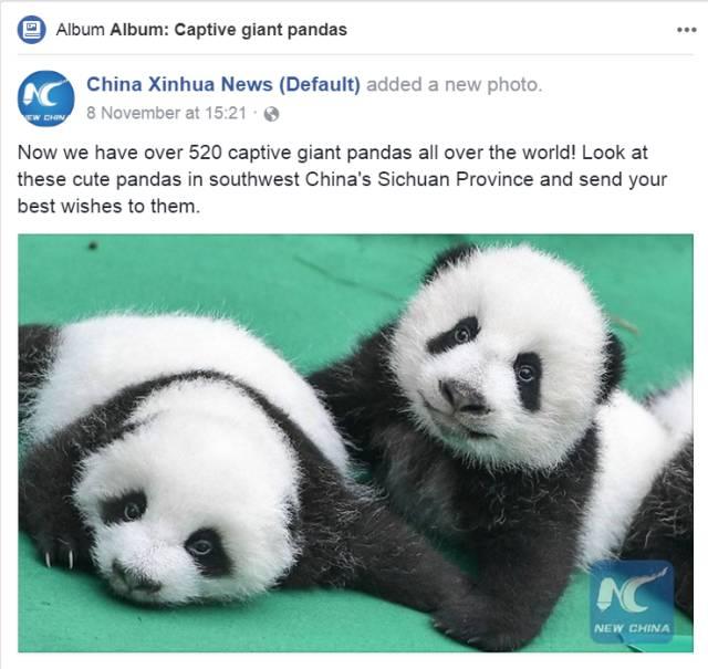 新华社大熊猫报道海媒截图↑
