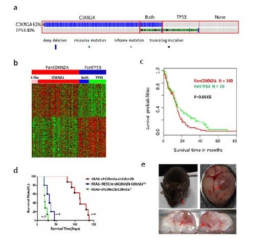 昆明动物所等在胶质母细胞瘤分型研究中取得新进展