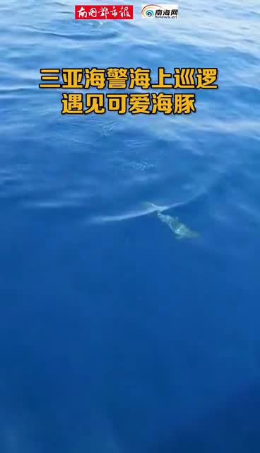 好治愈!萌萌哒海豚现身三亚附近海域腾空戏水