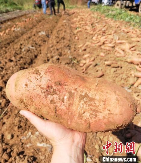 """河北涞水携手北京房山探索""""订单"""