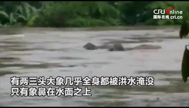 印度喀拉拉邦遭遇洪灾 急流卷走大象