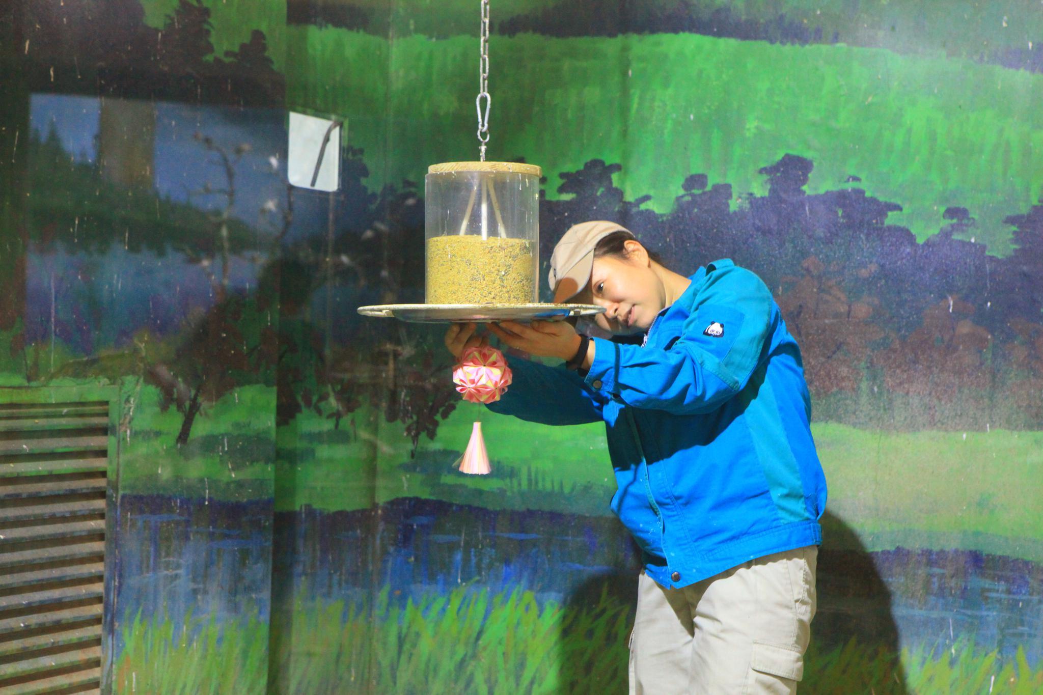 """工作人员在场馆挂起了自制""""灯笼"""".北京动物园供图图片"""