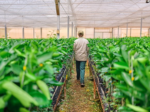 9188彩票网中奖会改么,专业制茶人分享:什么是老茶头,它跟普通茶有何区别?
