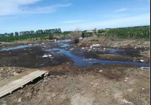 巴彦县兴旺镇宝成养殖公司臭气熏天、粪污渗坑排放