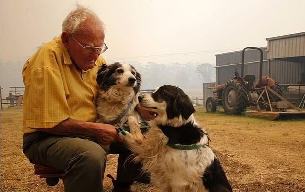 澳洲森林大火85岁老人被迫紧急撤离,火中重返家园与宠物狗团聚