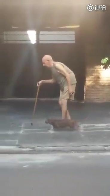 街上遇到一位老爷爷遛狗,狗狗表示,不管你走得再慢,我都等你