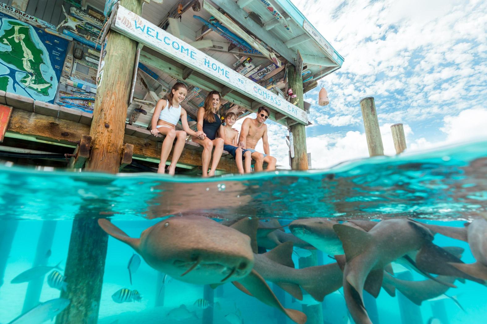 大冷天到巴哈马度假,邂逅粉色沙滩和网红小猪