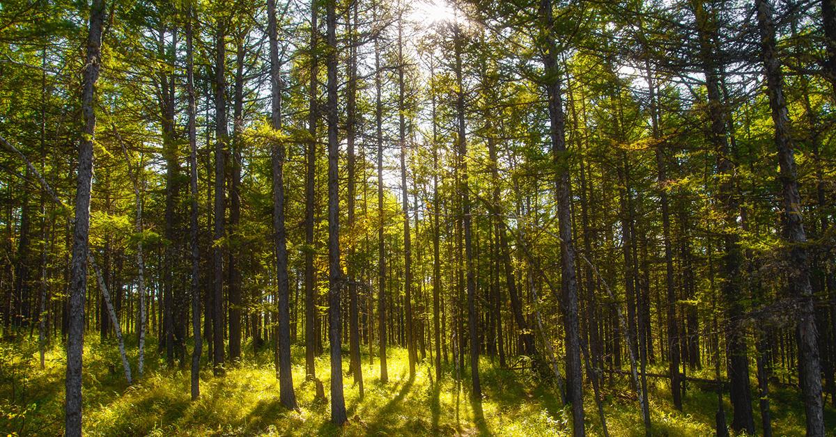 森林法修订草案二审稿引热议:建议对盗伐滥伐林木行为加大处罚力度