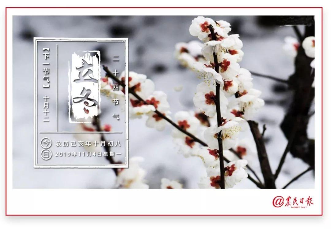 农业农村部崔野韩当选国际植物新品种保护联盟理事会副主席