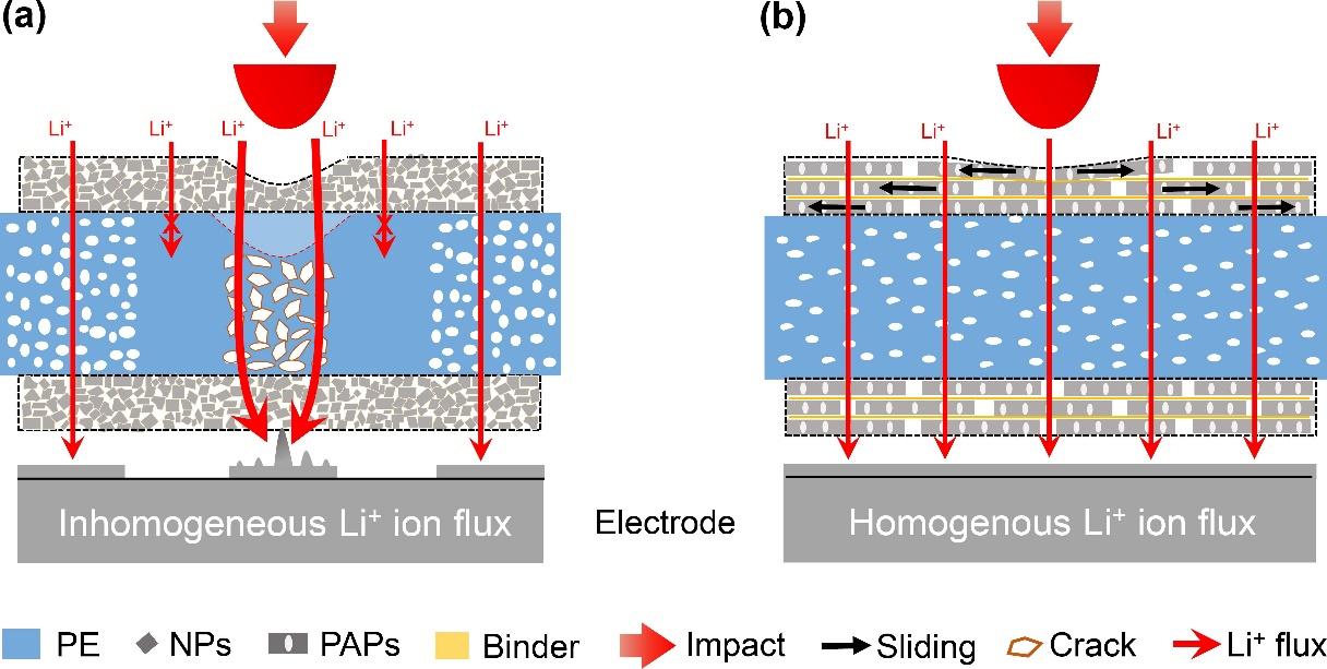 中国科大仿珍珠母层隔膜提升锂电池抗冲击性能
