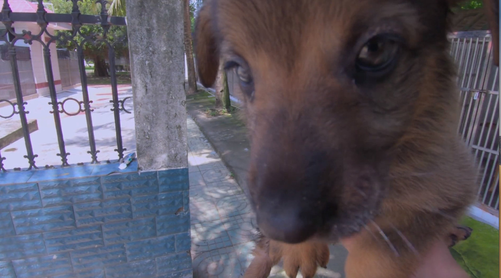 警犬:说好的失误要剪掉!人与犬之间的信任呢?