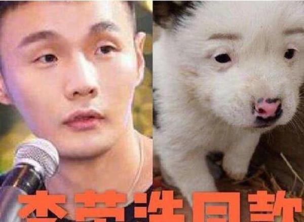 撞脸明星的发型们,李荣浩搞笑发博抱怨,最后一帅气的中长发动物图片