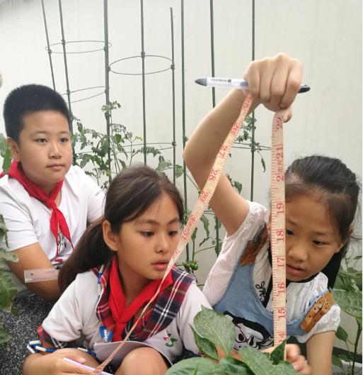 培育太空番茄,研究种叶得花!这