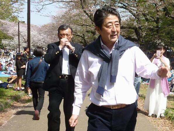 日本首相安倍晋三便装在公园踱步赏樱花