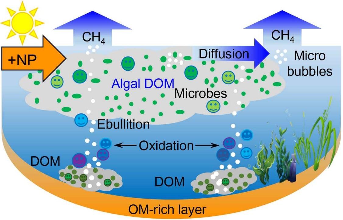 有色可溶性有机物的温室气体效应研究取得进展