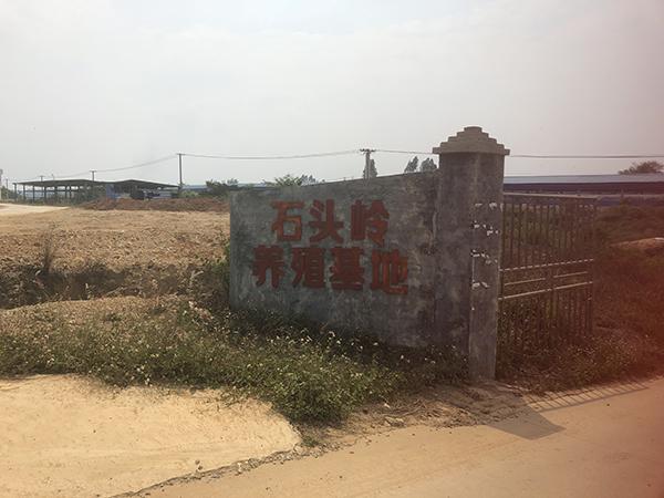 位于村西边的猪栏基地