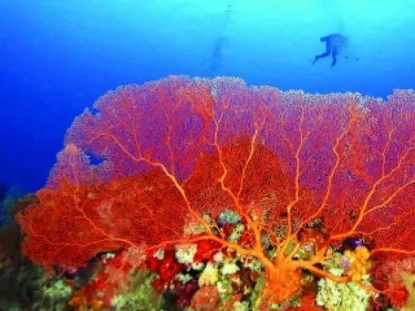 问吧精选|如果珊瑚礁灭绝,我们的海底世界会变成什么样?