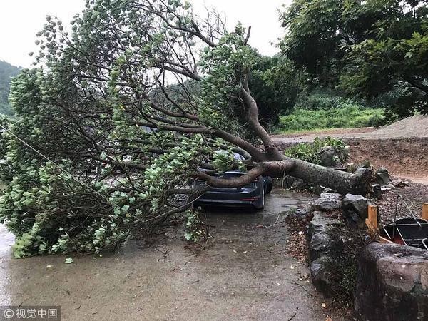 韩国济州遭遇台风 狂风吹倒大树压扁汽车