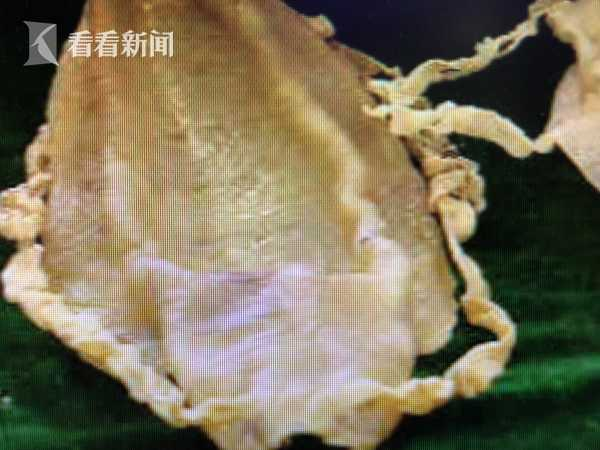 美人鱼鲛人食物一览