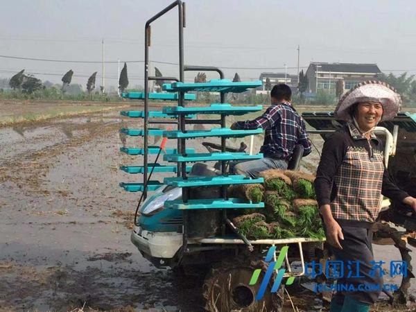 泰兴虹桥六圩粮食种植合作社获评江苏十佳绿色生态无公害种植示范基地