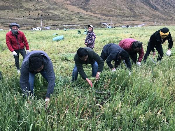 摩天注册企行动㉝摩天注册中国铁建对口扶贫图片