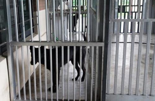 彰化消防署搜救队中部分队传出负责饲养搜救犬的队员,以不实发票虚报诈领公款。图片来源:台湾《联合报》 记者 凌筠婷/翻摄