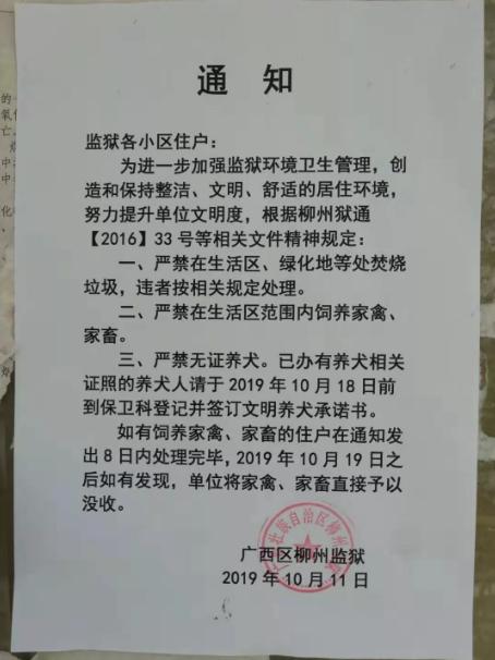 广西柳州一地严禁无证养犬 居民:根本没地方办证|没收