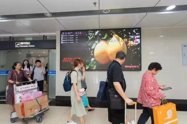 """""""霸占你的中秋节!""""梅州柚密集登陆高铁站、机场、楼宇……"""