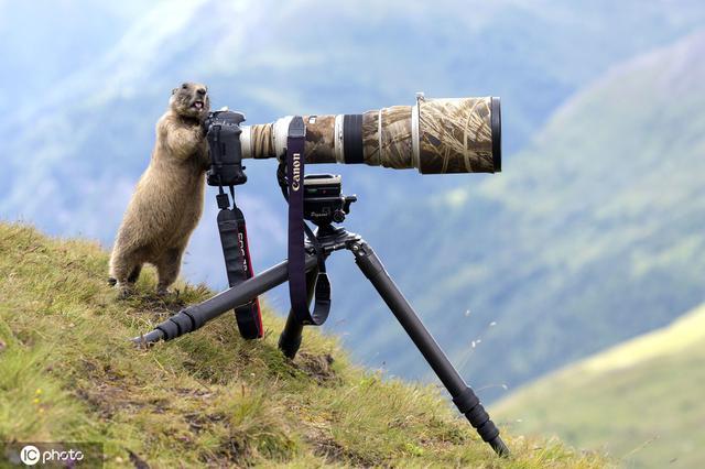 """晒晒动物界""""摄影大师""""长枪短炮玩的各种溜"""