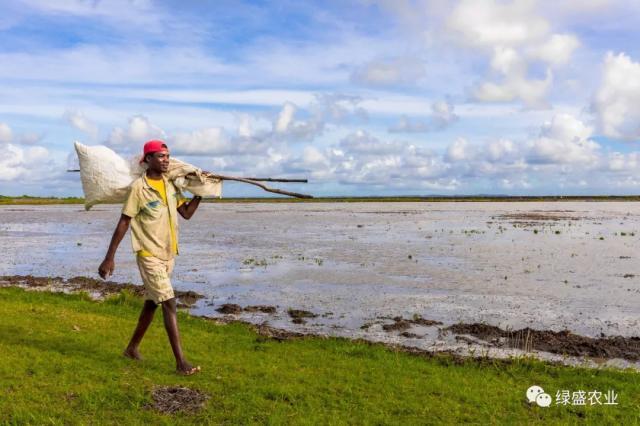 绿盛携手万宝非洲 将智慧农业普及到莫桑比克