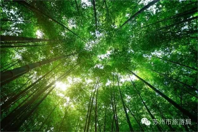 屏保自然竹林风景