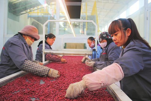 天镇县联社:信贷资金支持扶贫产业扩规模