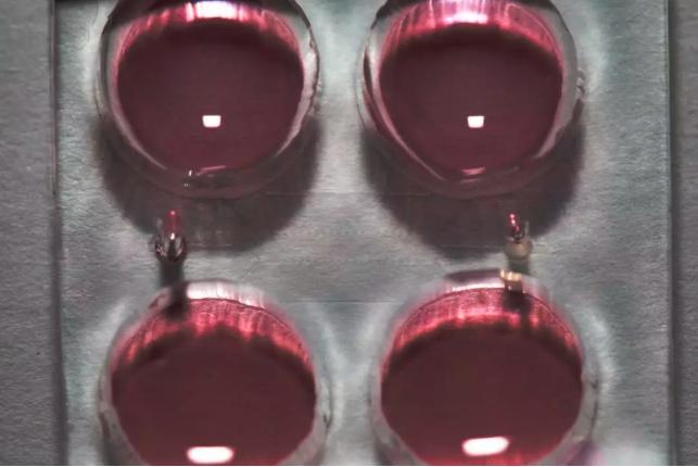 """华人科学家开发突破性干细胞平台 打开人类发育""""黑盒子"""""""