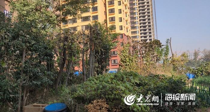 """菏泽多个小区绿化带变""""菜园"""" 物业管理缺失、业主意识不足"""