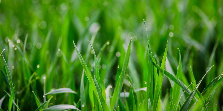 """世界土壤日的""""中国方案"""":亲土种植改善耕地1.6亿亩"""