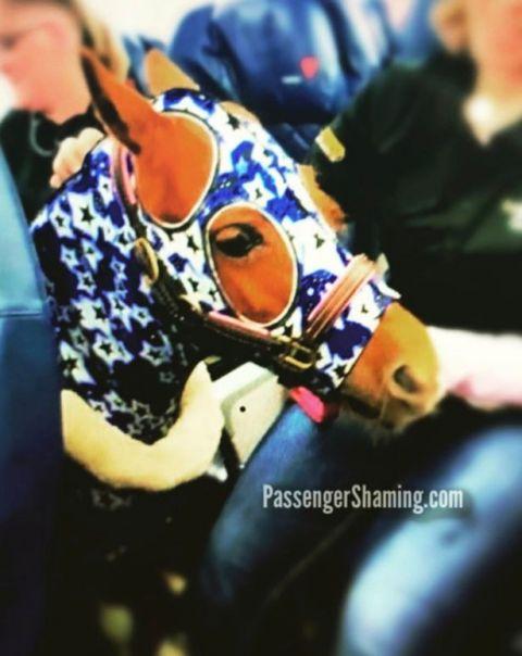 飞机客舱出现一匹马 乘客们全都懵了